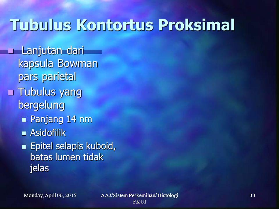 Monday, April 06, 2015AAJ/Sistem Perkemihan/ Histologi FKUI 33 Tubulus Kontortus Proksimal Lanjutan dari kapsula Bowman pars parietal Lanjutan dari ka