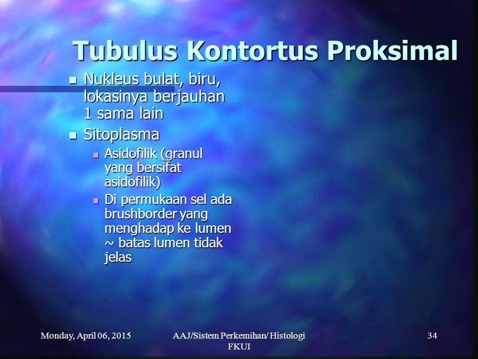 Monday, April 06, 2015AAJ/Sistem Perkemihan/ Histologi FKUI 34 Tubulus Kontortus Proksimal Nukleus bulat, biru, lokasinya berjauhan 1 sama lain Nukleu