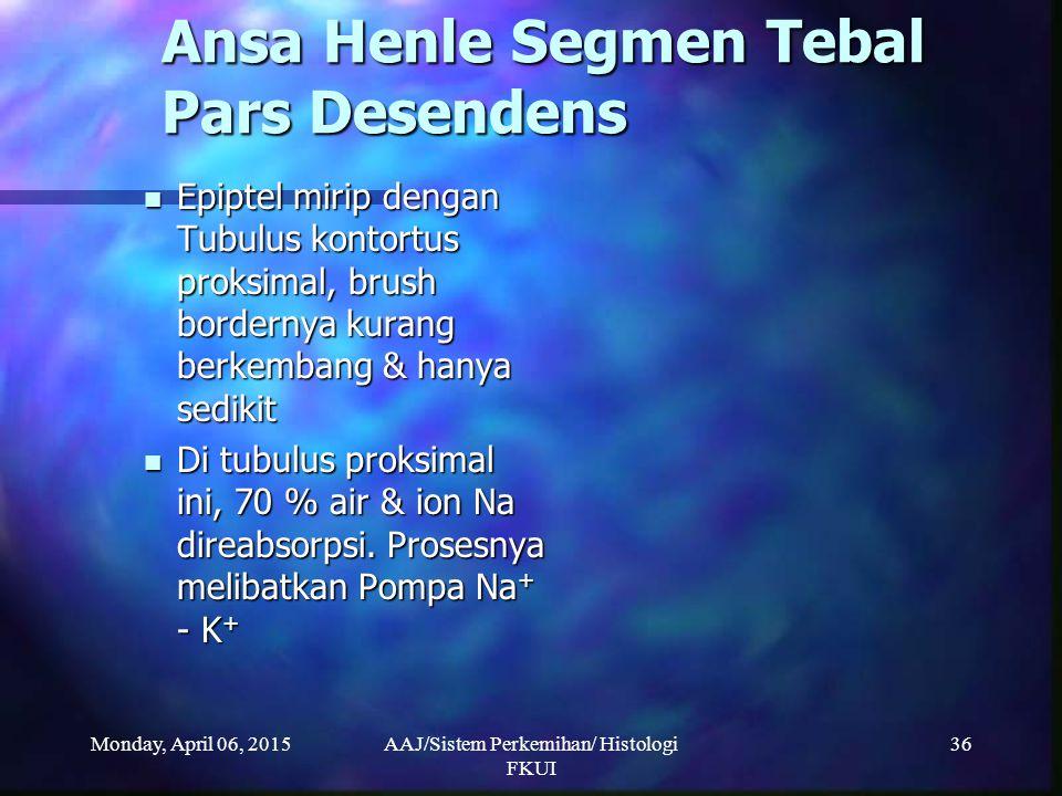 Monday, April 06, 2015AAJ/Sistem Perkemihan/ Histologi FKUI 36 Ansa Henle Segmen Tebal Pars Desendens Epiptel mirip dengan Tubulus kontortus proksimal
