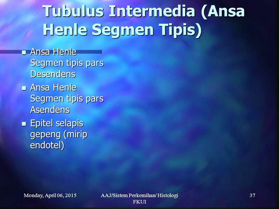 Monday, April 06, 2015AAJ/Sistem Perkemihan/ Histologi FKUI 37 Tubulus Intermedia (Ansa Henle Segmen Tipis) Ansa Henle Segmen tipis pars Desendens Ans