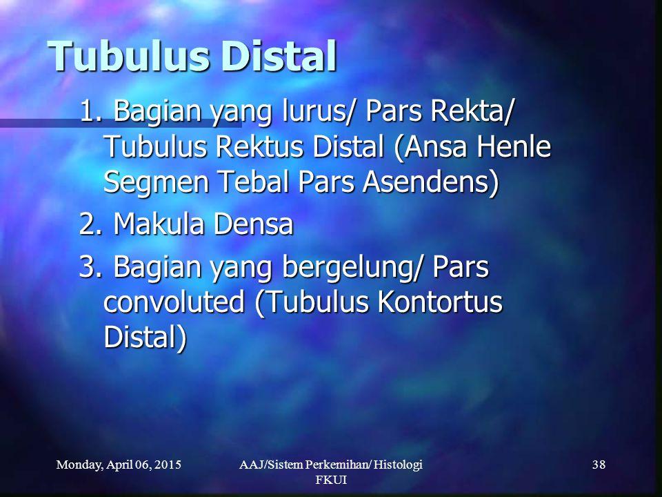 Monday, April 06, 2015AAJ/Sistem Perkemihan/ Histologi FKUI 38 Tubulus Distal 1. Bagian yang lurus/ Pars Rekta/ Tubulus Rektus Distal (Ansa Henle Segm