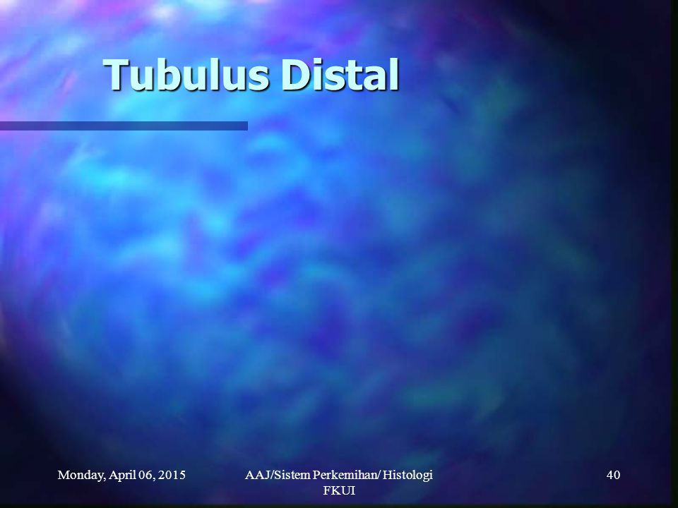Monday, April 06, 2015AAJ/Sistem Perkemihan/ Histologi FKUI 40 Tubulus Distal
