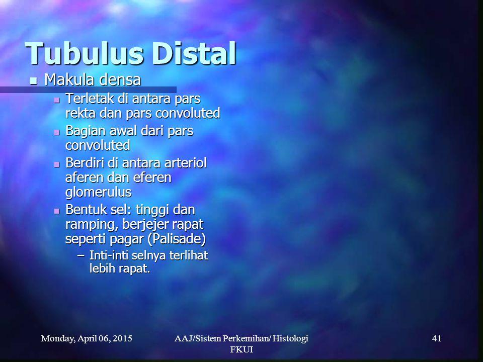 Monday, April 06, 2015AAJ/Sistem Perkemihan/ Histologi FKUI 41 Tubulus Distal Makula densa Makula densa Terletak di antara pars rekta dan pars convolu