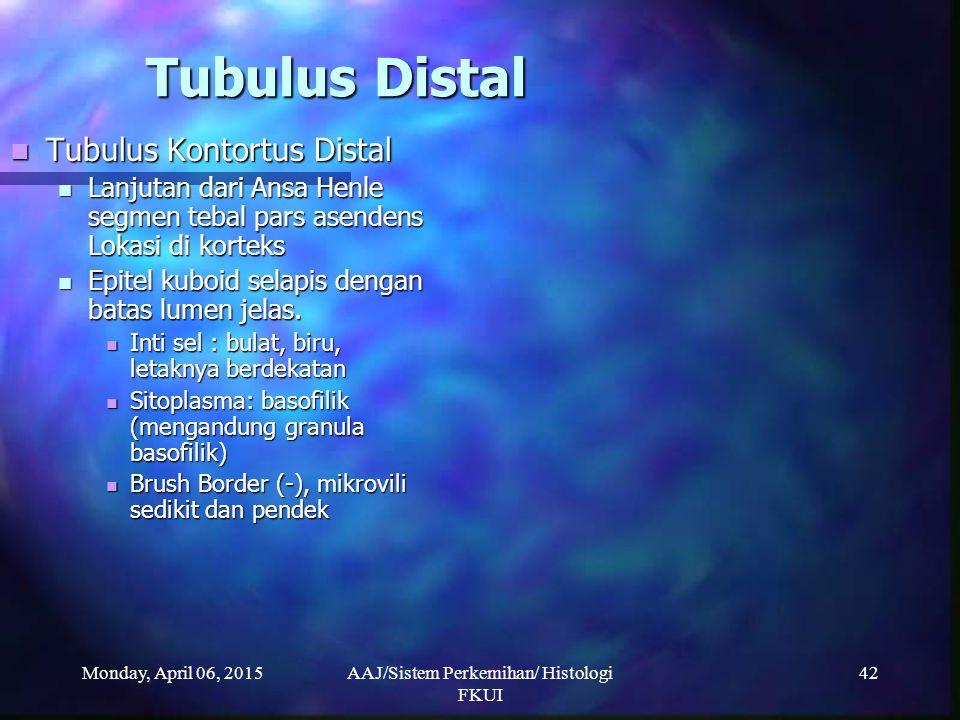 Monday, April 06, 2015AAJ/Sistem Perkemihan/ Histologi FKUI 42 Tubulus Distal Tubulus Kontortus Distal Tubulus Kontortus Distal Lanjutan dari Ansa Hen