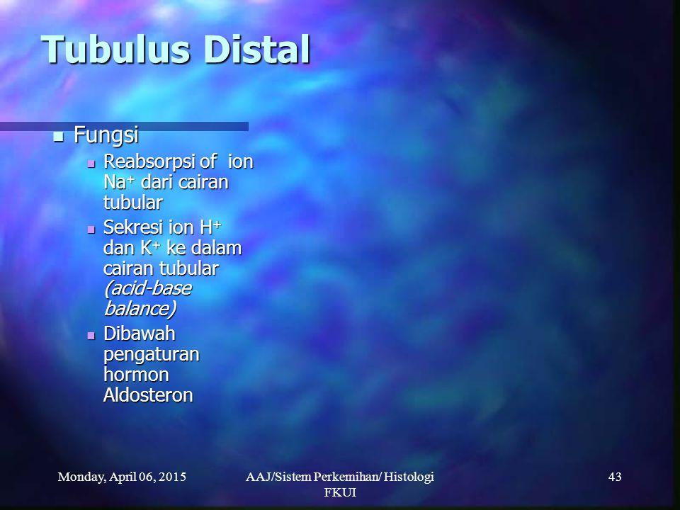 Monday, April 06, 2015AAJ/Sistem Perkemihan/ Histologi FKUI 43 Tubulus Distal Fungsi Fungsi Reabsorpsi of ion Na + dari cairan tubular Reabsorpsi of i