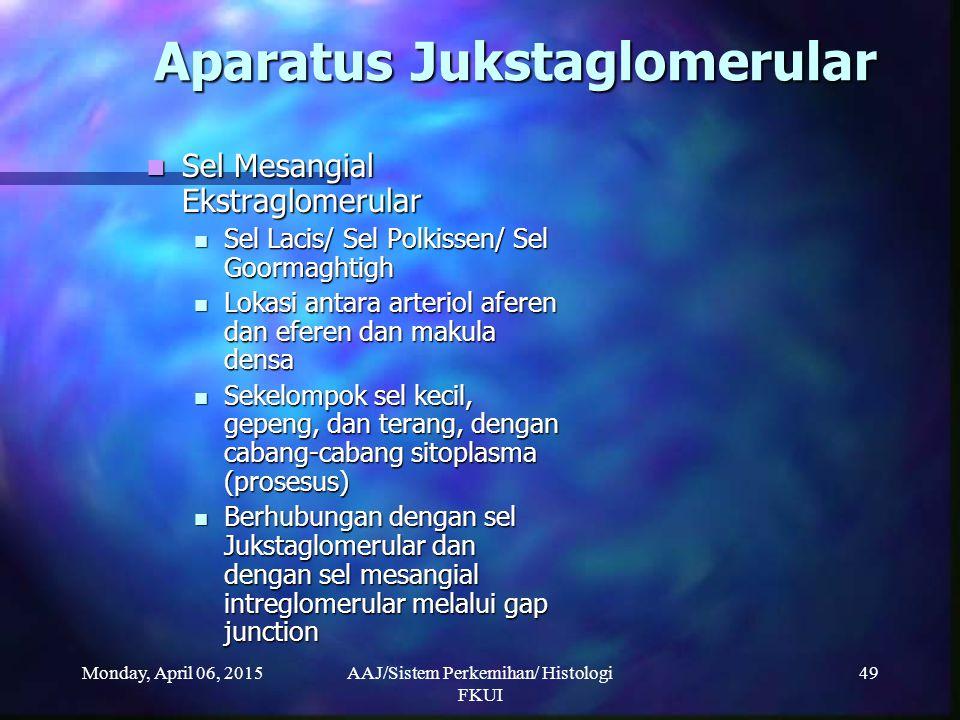 Monday, April 06, 2015AAJ/Sistem Perkemihan/ Histologi FKUI 49 Aparatus Jukstaglomerular Sel Mesangial Ekstraglomerular Sel Mesangial Ekstraglomerular
