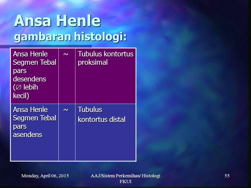 Monday, April 06, 2015AAJ/Sistem Perkemihan/ Histologi FKUI 55 Ansa Henle gambaran histologi: Ansa Henle Segmen Tebal pars desendens (  lebih kecil)