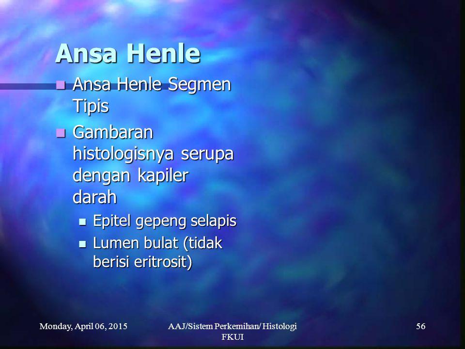 Monday, April 06, 2015AAJ/Sistem Perkemihan/ Histologi FKUI 56 Ansa Henle Ansa Henle Segmen Tipis Ansa Henle Segmen Tipis Gambaran histologisnya serup