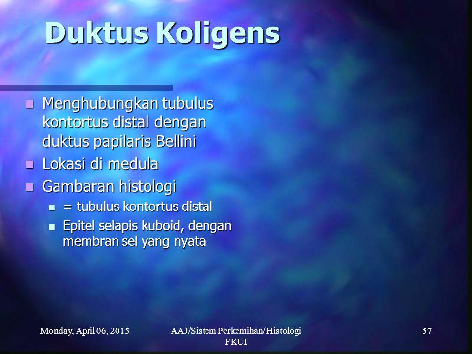 Monday, April 06, 2015AAJ/Sistem Perkemihan/ Histologi FKUI 57 Duktus Koligens Menghubungkan tubulus kontortus distal dengan duktus papilaris Bellini