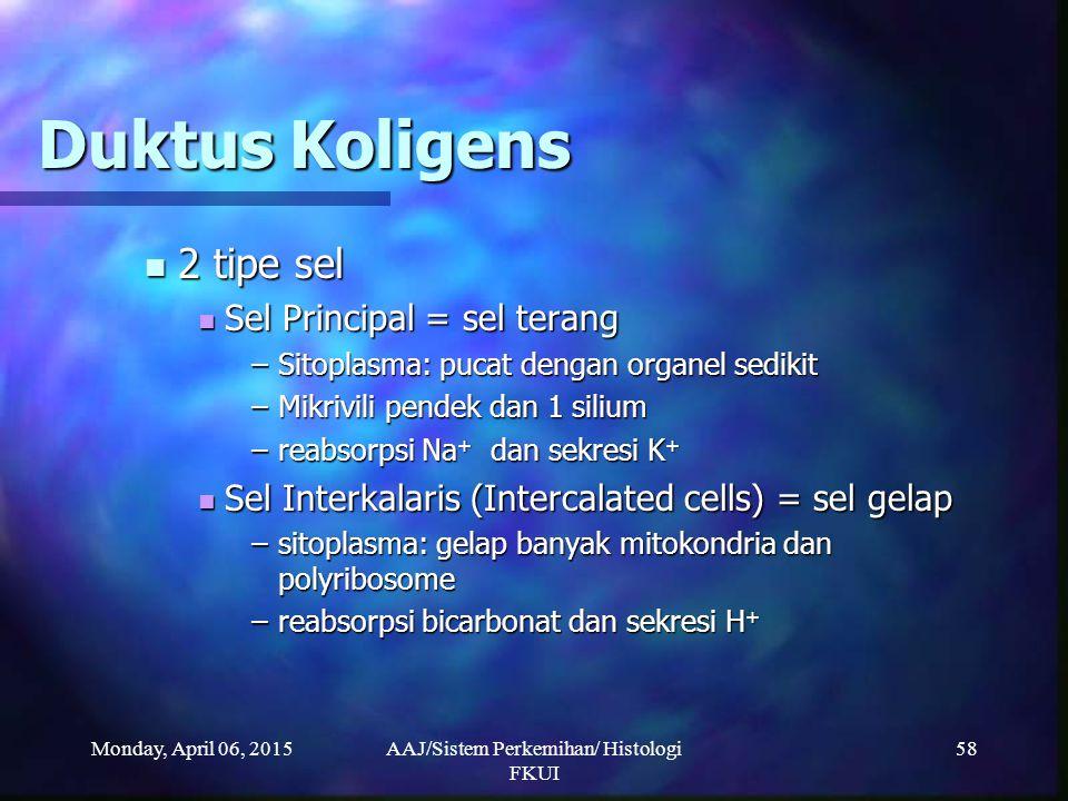 Monday, April 06, 2015AAJ/Sistem Perkemihan/ Histologi FKUI 58 Duktus Koligens 2 tipe sel 2 tipe sel Sel Principal = sel terang Sel Principal = sel te
