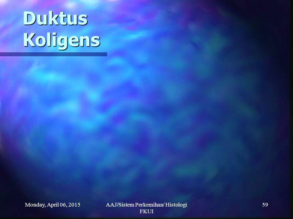Monday, April 06, 2015AAJ/Sistem Perkemihan/ Histologi FKUI 59 Duktus Koligens
