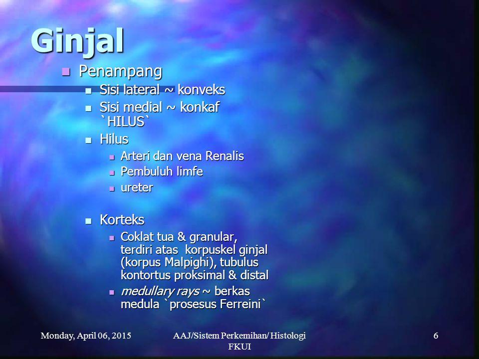 Monday, April 06, 2015AAJ/Sistem Perkemihan/ Histologi FKUI 6 Ginjal Penampang Penampang Sisi lateral ~ konveks Sisi lateral ~ konveks Sisi medial ~ k