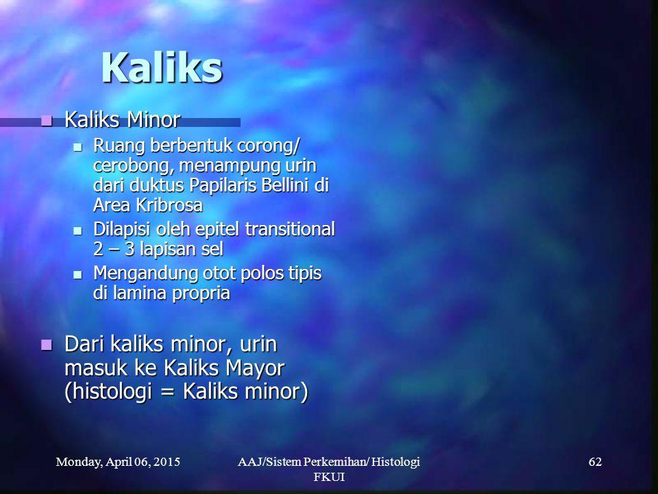 Monday, April 06, 2015AAJ/Sistem Perkemihan/ Histologi FKUI 62 Kaliks Kaliks Minor Kaliks Minor Ruang berbentuk corong/ cerobong, menampung urin dari