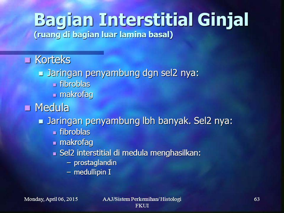 Monday, April 06, 2015AAJ/Sistem Perkemihan/ Histologi FKUI 63 Bagian Interstitial Ginjal (ruang di bagian luar lamina basal) Korteks Korteks Jaringan