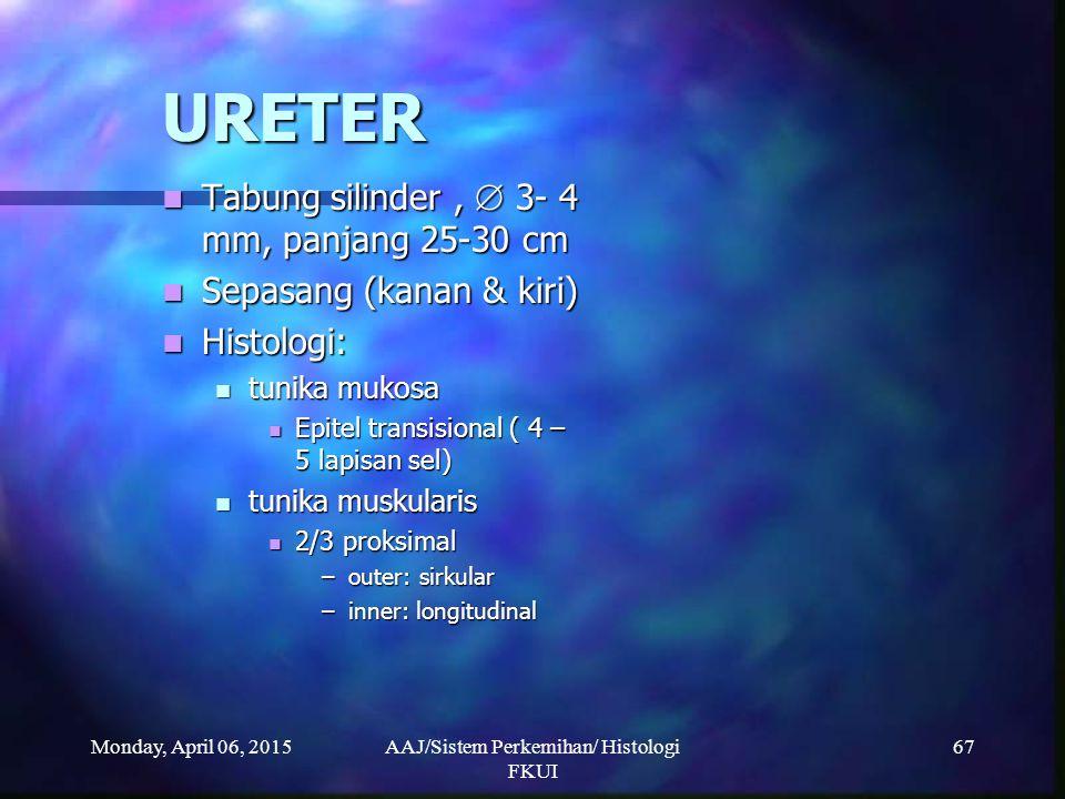 Monday, April 06, 2015AAJ/Sistem Perkemihan/ Histologi FKUI 67 URETER Tabung silinder,  3- 4 mm, panjang 25-30 cm Tabung silinder,  3- 4 mm, panjang