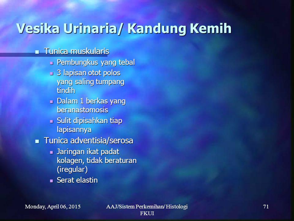 Monday, April 06, 2015AAJ/Sistem Perkemihan/ Histologi FKUI 71 Vesika Urinaria/ Kandung Kemih Tunica muskularis Tunica muskularis Pembungkus yang teba