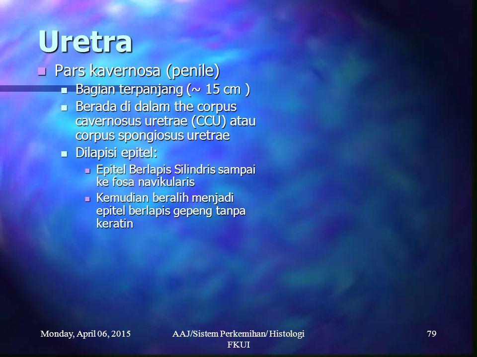Monday, April 06, 2015AAJ/Sistem Perkemihan/ Histologi FKUI 79 Uretra Pars kavernosa (penile) Pars kavernosa (penile) Bagian terpanjang (~ 15 cm ) Bag