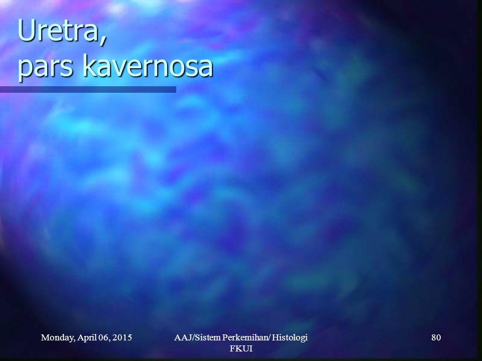 Monday, April 06, 2015AAJ/Sistem Perkemihan/ Histologi FKUI 80 Uretra, pars kavernosa
