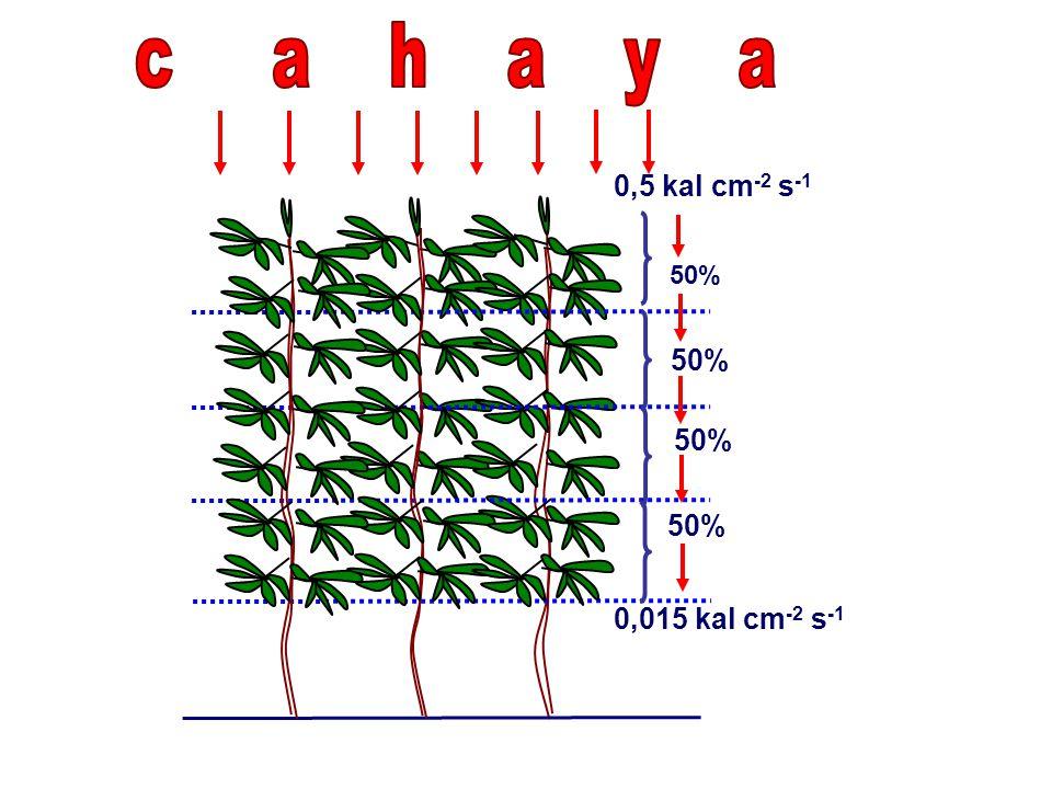 50% 0,5 kal cm -2 s -1 0,015 kal cm -2 s -1