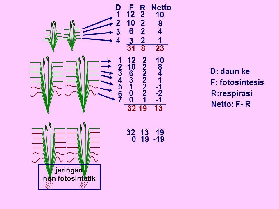 jaringan non fotosintetik D 1 2 3 4 F R Netto 12 10 6 3 2 2 2 2 8 4 1 23 2 1 3 4 5 6 7 12 6 3 1 0 0 2 2 2 2 2 2 1 10 8 4 1 -2 19 D: daun ke F: fotosintesis R:respirasi Netto: F- R 318 32 1332 1319 0 -19 10