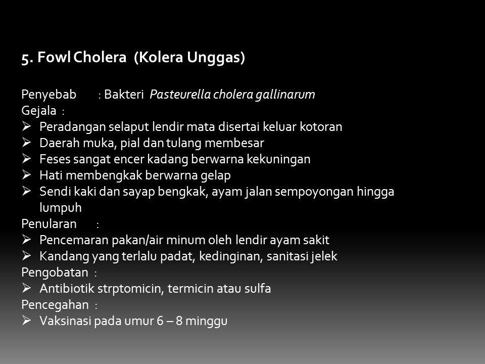 5. Fowl Cholera (Kolera Unggas) Penyebab : Bakteri Pasteurella cholera gallinarum Gejala :  Peradangan selaput lendir mata disertai keluar kotoran 