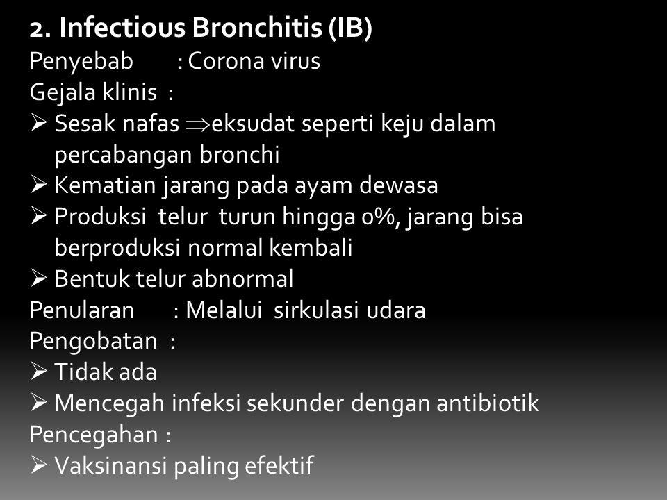 2. Infectious Bronchitis (IB) Penyebab : Corona virus Gejala klinis :  Sesak nafas  eksudat seperti keju dalam percabangan bronchi  Kematian jarang
