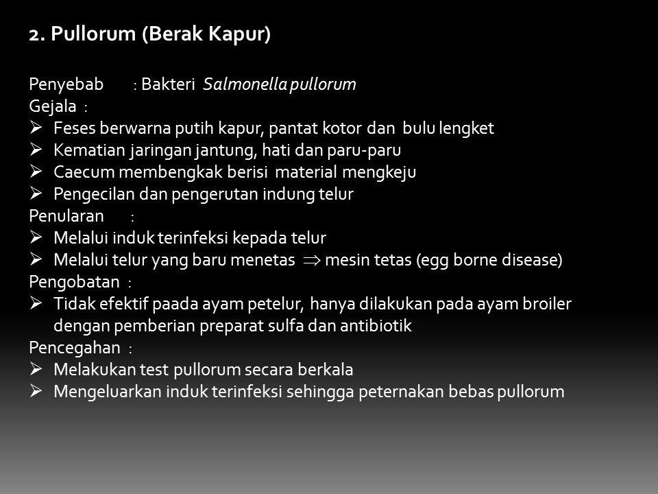 2. Pullorum (Berak Kapur) Penyebab : Bakteri Salmonella pullorum Gejala :  Feses berwarna putih kapur, pantat kotor dan bulu lengket  Kematian jarin