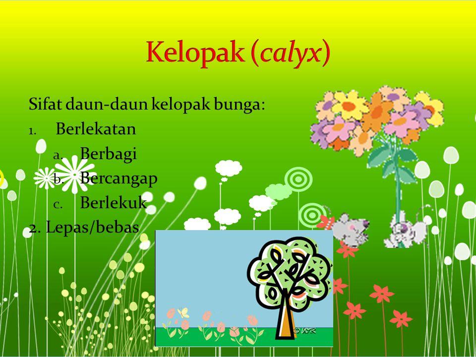 Sifat daun-daun kelopak bunga: 1. Berlekatan a. Berbagi b. Bercangap c. Berlekuk 2. Lepas/bebas