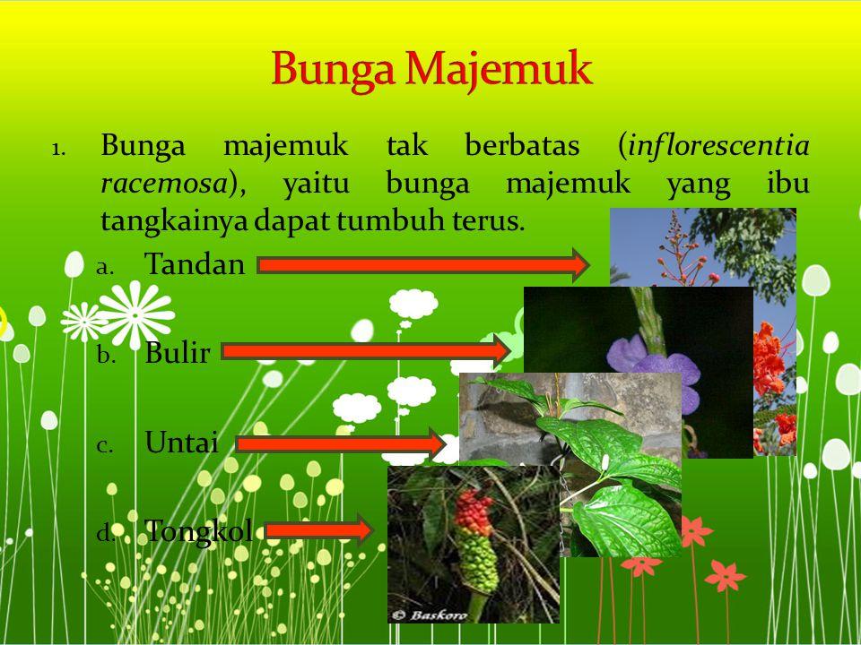 1. Bunga majemuk tak berbatas (inflorescentia racemosa), yaitu bunga majemuk yang ibu tangkainya dapat tumbuh terus. a. Tandan b. Bulir c. Untai d. To