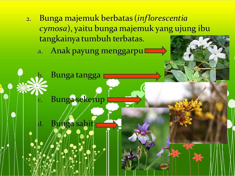 2. Bunga majemuk berbatas (inflorescentia cymosa), yaitu bunga majemuk yang ujung ibu tangkainya tumbuh terbatas. a. Anak payung menggarpu b. Bunga ta