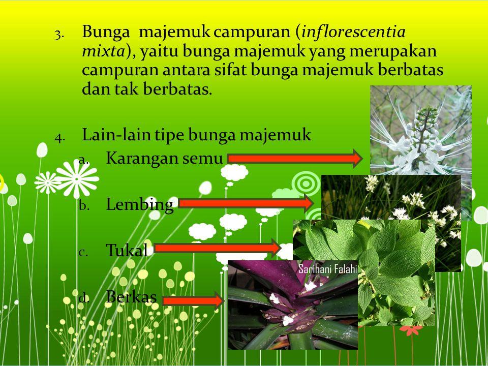 3. Bunga majemuk campuran (inflorescentia mixta), yaitu bunga majemuk yang merupakan campuran antara sifat bunga majemuk berbatas dan tak berbatas. 4.