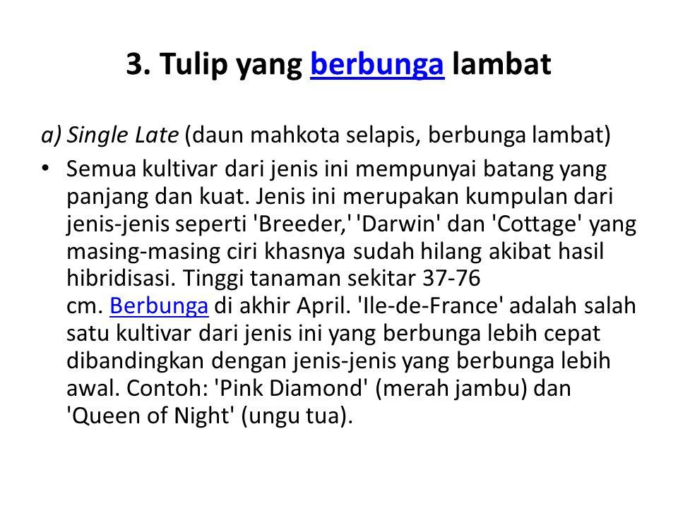 3. Tulip yang berbunga lambatberbunga a) Single Late (daun mahkota selapis, berbunga lambat) Semua kultivar dari jenis ini mempunyai batang yang panja