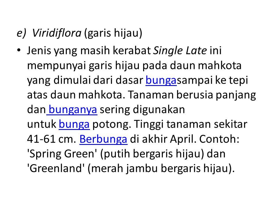 e) Viridiflora (garis hijau) Jenis yang masih kerabat Single Late ini mempunyai garis hijau pada daun mahkota yang dimulai dari dasar bungasampai ke t