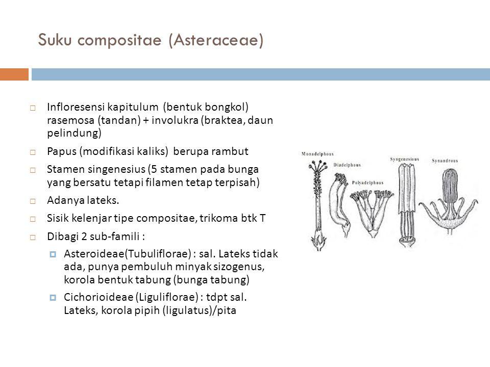 Suku compositae (Asteraceae)  Infloresensi kapitulum (bentuk bongkol) rasemosa (tandan) + involukra (braktea, daun pelindung)  Papus (modifikasi kal
