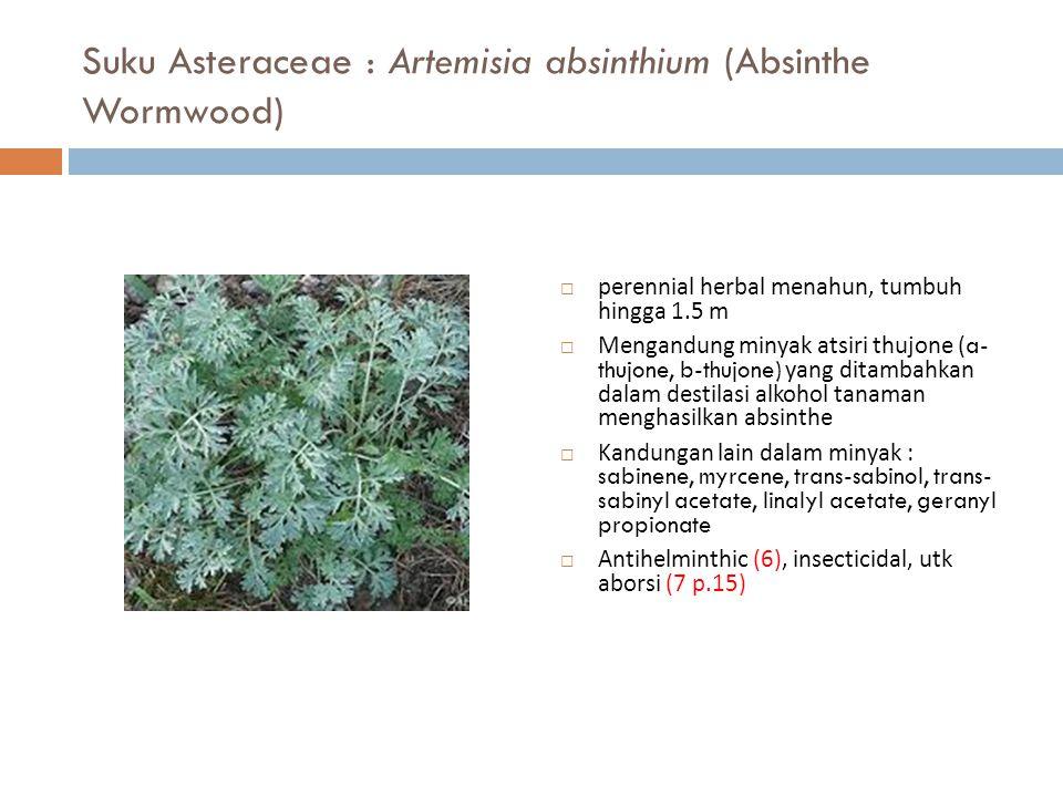 Suku Asteraceae : Artemisia absinthium (Absinthe Wormwood)  perennial herbal menahun, tumbuh hingga 1.5 m  Mengandung minyak atsiri thujone ( a- thu
