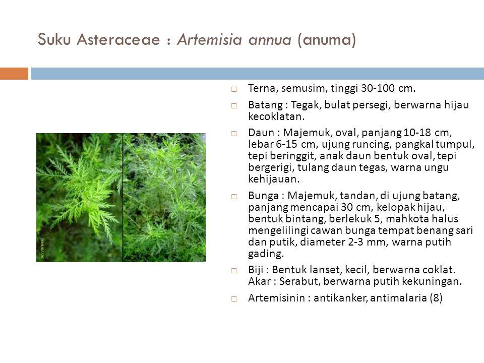 Suku Asteraceae : Artemisia annua (anuma)  Terna, semusim, tinggi 30-100 cm.  Batang : Tegak, bulat persegi, berwarna hijau kecoklatan.  Daun : Maj