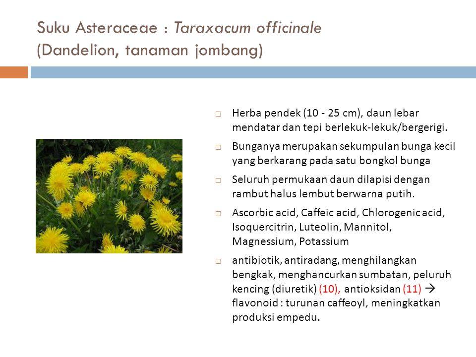 Suku Asteraceae : Taraxacum officinale (Dandelion, tanaman jombang)  Herba pendek (10 - 25 cm), daun lebar mendatar dan tepi berlekuk-lekuk/bergerigi
