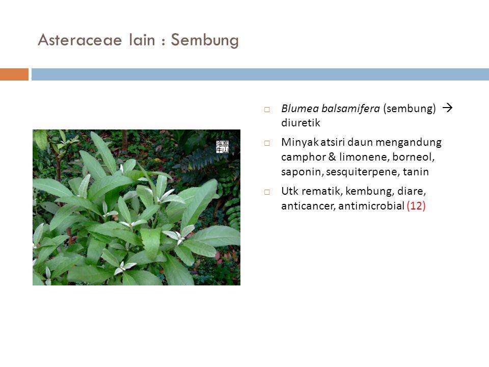 Asteraceae lain : Sembung  Blumea balsamifera (sembung)  diuretik  Minyak atsiri daun mengandung camphor & limonene, borneol, saponin, sesquiterpen