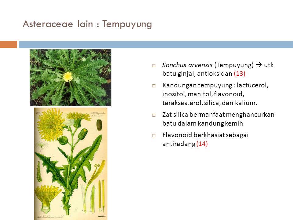 Asteraceae lain : Tempuyung  Sonchus arvensis (Tempuyung)  utk batu ginjal, antioksidan (13)  Kandungan tempuyung : lactucerol, inositol, manitol,