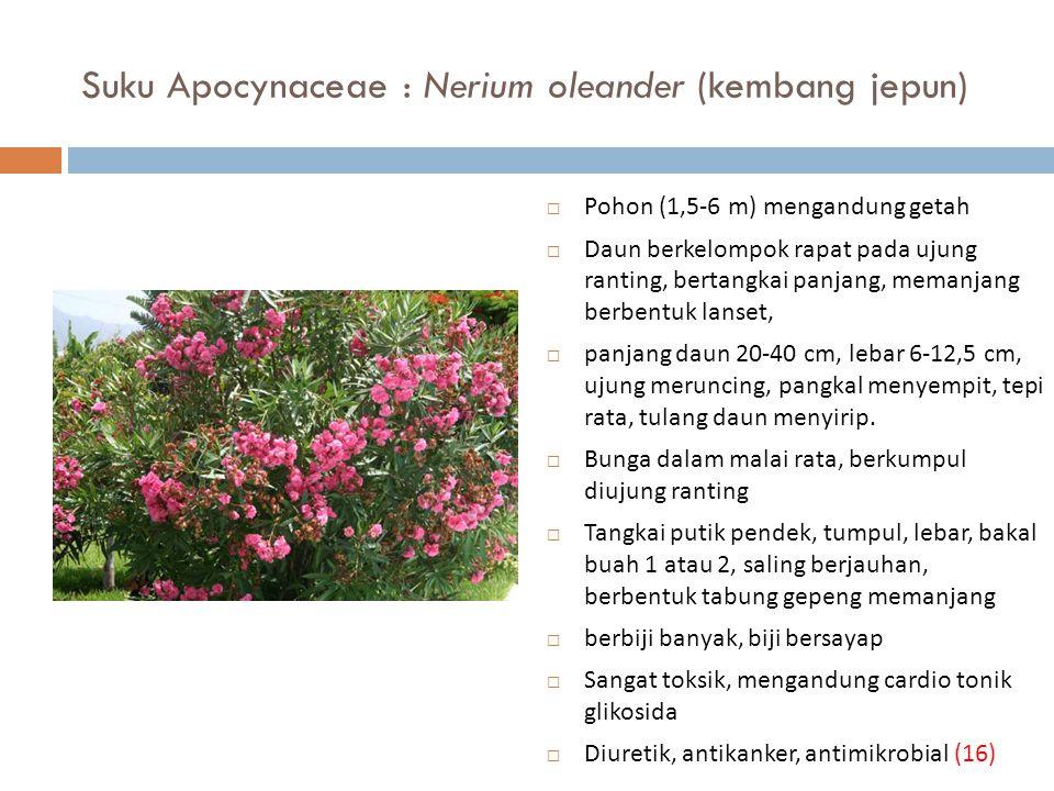 Suku Apocynaceae : Nerium oleander (kembang jepun)  Pohon (1,5-6 m) mengandung getah  Daun berkelompok rapat pada ujung ranting, bertangkai panjang,