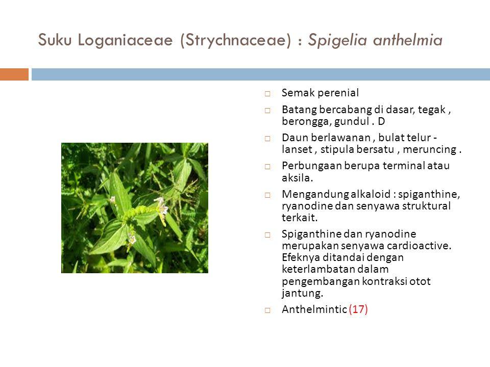 Suku Loganiaceae (Strychnaceae) : Spigelia anthelmia  Semak perenial  Batang bercabang di dasar, tegak, berongga, gundul. D  Daun berlawanan, bulat