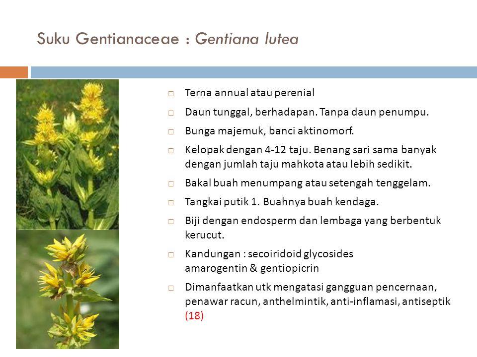 Suku Gentianaceae : Gentiana lutea  Terna annual atau perenial  Daun tunggal, berhadapan. Tanpa daun penumpu.  Bunga majemuk, banci aktinomorf.  K