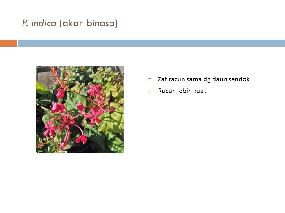 P. indica (akar binasa)  Zat racun sama dg daun sendok  Racun lebih kuat