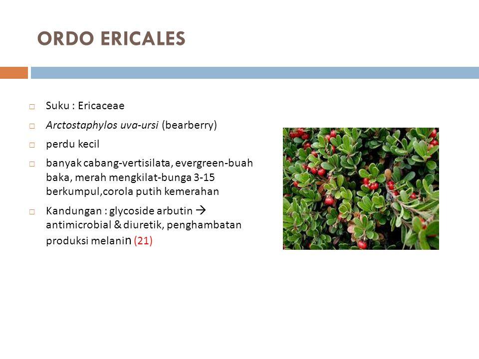 ORDO ERICALES  Suku : Ericaceae  Arctostaphylos uva-ursi (bearberry)  perdu kecil  banyak cabang-vertisilata, evergreen-buah baka, merah mengkilat