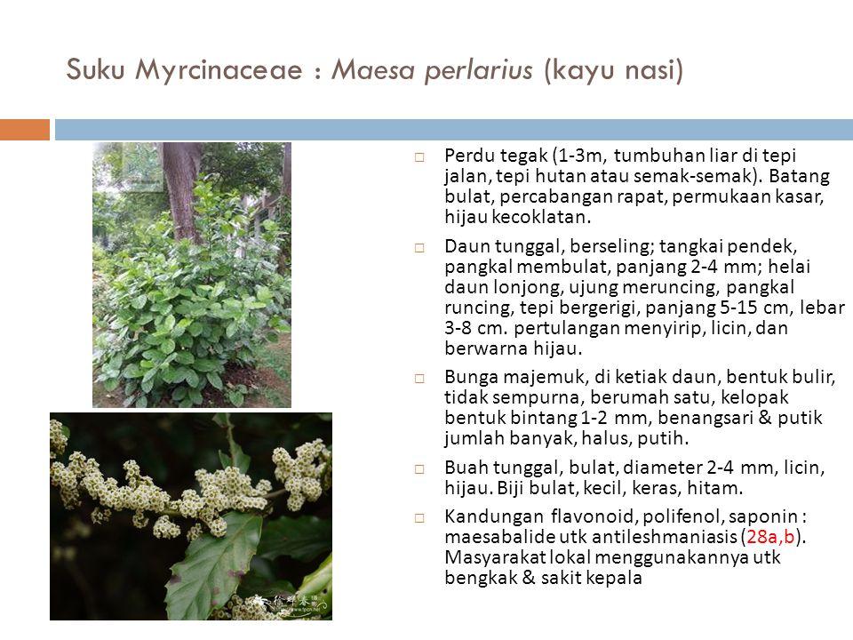 Suku Myrcinaceae : Maesa perlarius (kayu nasi)  Perdu tegak (1-3m, tumbuhan liar di tepi jalan, tepi hutan atau semak-semak). Batang bulat, percabang