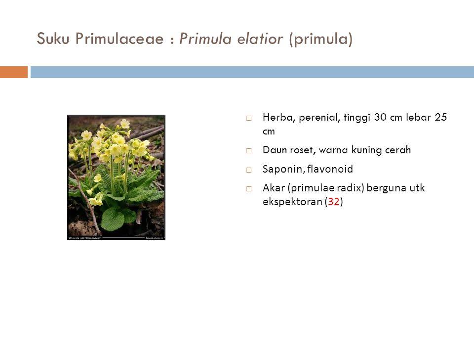 Suku Primulaceae : Primula elatior (primula)  Herba, perenial, tinggi 30 cm lebar 25 cm  Daun roset, warna kuning cerah  Saponin, flavonoid  Akar