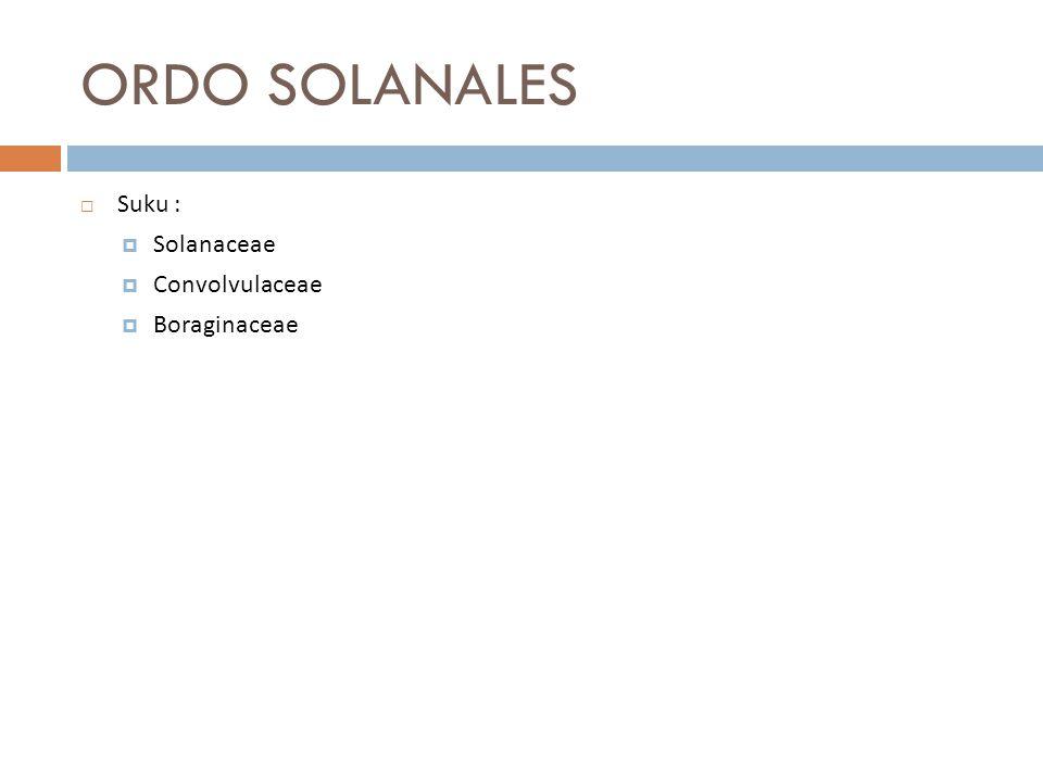 ORDO SOLANALES  Suku :  Solanaceae  Convolvulaceae  Boraginaceae