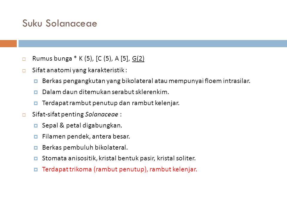 Suku Solanaceae  Rumus bunga * K (5), [C (5), A [5], G(2)  Sifat anatomi yang karakteristik :  Berkas pengangkutan yang bikolateral atau mempunyai