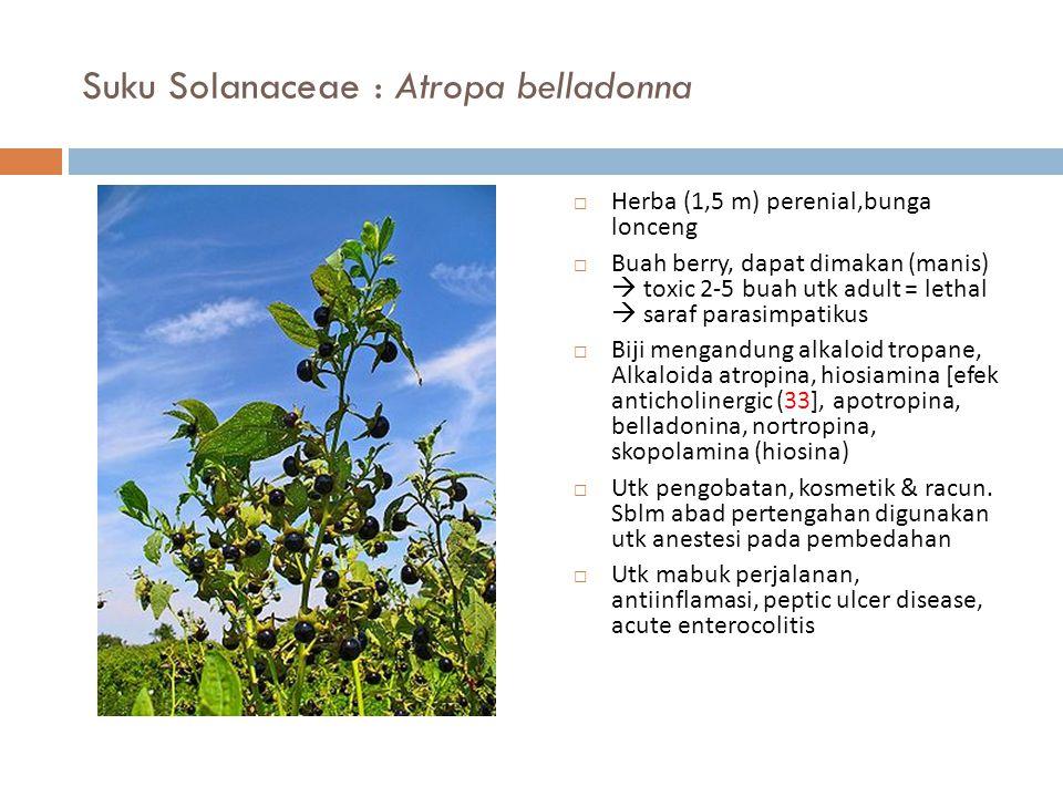 Suku Solanaceae : Atropa belladonna  Herba (1,5 m) perenial,bunga lonceng  Buah berry, dapat dimakan (manis)  toxic 2-5 buah utk adult = lethal  s