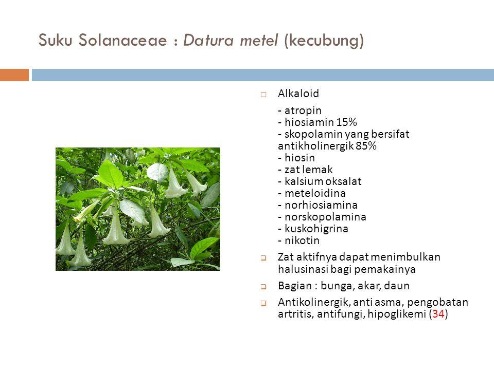 Suku Solanaceae : Datura metel (kecubung)  Alkaloid - atropin - hiosiamin 15% - skopolamin yang bersifat antikholinergik 85% - hiosin - zat lemak - k